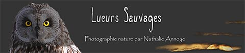 Lueurs sauvages